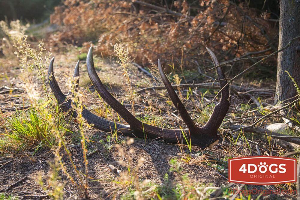 Jak powstają gryzaki z poroża jelenia?